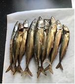 Makreller.jpg